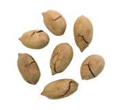 Fried Pecan Nut o Carya dulce entero Illinoinensis con Shell Isolated agrietada Foto de archivo libre de regalías