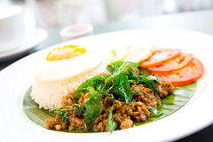 Fried pork basil Rice Stock Photography