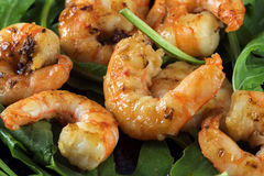 Fried prawns or shrimps on arugula rocket salad, close up shot Stock Photos