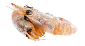 Fried Prawns on white Stock Images