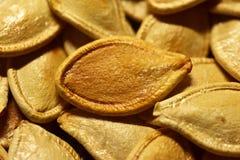 Fried Pumpkin Seeds image libre de droits