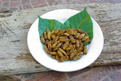 Fried pupa. Nature food high protein Royalty Free Stock Photo