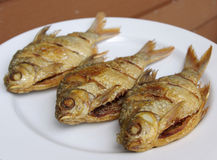 Fried red-fin barb Royalty Free Stock Photo