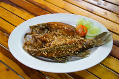 Fried red snapper Stock Images