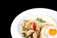 Fried rice basil. Fried rice with basil chicken and fried egg royalty free stock image