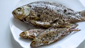 Fried river fish on white plate