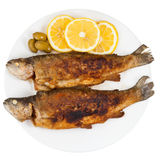 Fried river trout fish on white background Stock Photos