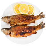 Fried river trout fish on white background Royalty Free Stock Photo