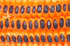 Fried salted corns Royalty Free Stock Photo