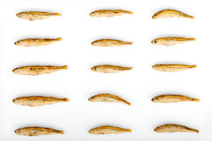 Fried Sand Smelt Repetitive Stock Image