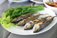 Fried sardine on plate in Asian restaurant Royalty Free Stock Images