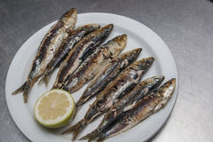 Fried sardines. Served with lemon on white ceramic Stock Photography