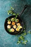 Fried scallops with butter sauce. Fried scallops with butter lemon spicy sauce in cast-iron pan served with green salad over turquoise texture background. Top Royalty Free Stock Image