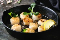 Fried scallops with butter sauce. Fried scallops with butter lemon spicy sauce in cast-iron pan served with green salad and textile napkin over old dark metal Stock Photos