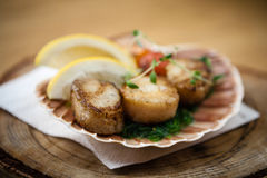 Fried scallops with vegetables Royalty Free Stock Photography