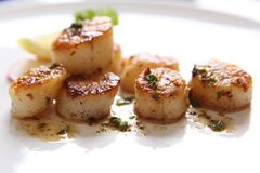 Fried Scallops on a white plate. In close up royalty free stock photography
