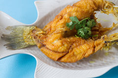 Fried Sea Bass. With fish sauce Stock Photography