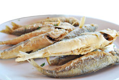Fried seafood. A dish of fried fish on a white background Royalty Free Stock Images