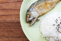 Fried Short-bodied mackerel with rice on green plate. Royalty Free Stock Image