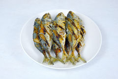 Fried Short-bodied mackerel. Fried Short-bodied mackerel in white background, Thai food Royalty Free Stock Image