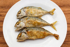 Fried short-bodied mackerel on white plate with wooden backgroun Stock Image