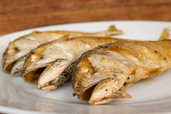 Fried short-bodied mackerel on white plate with wooden backgroun Royalty Free Stock Photos