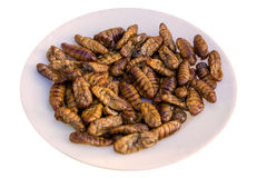 Fried silk worm is the food of the natives Royalty Free Stock Photo
