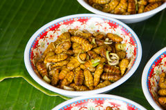 Fried silk worm is the food of the natives. Stock Image