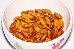 Fried silk worm Royalty Free Stock Photography