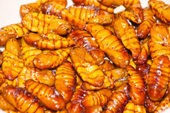 Fried silk worm Royalty Free Stock Images