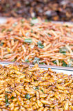 Fried Silk Worms. Royalty Free Stock Image