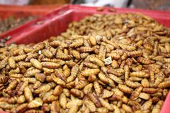 Fried silk worms Stock Images