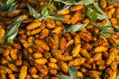 Fried silkworm in market, Thailand. Close up Stock Images