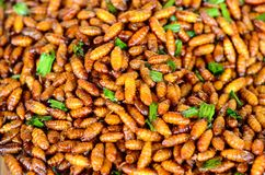 Fried Silkworm pupar Stock Images