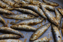 Fried Small Fish Royalty Free Stock Photos