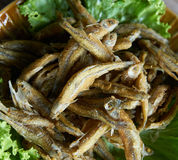 Fried small fish. In thailand Royalty Free Stock Photos