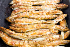 Fried small smelt fish on a barbecue grill  hotplate Stock Images