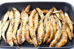 Fried small smelt fish on a barbecue grill  hotplate Royalty Free Stock Image