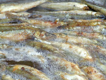 Fried small smelt fish. Fried small smelt tasty fish on a barbecue grill hotplate Stock Photo