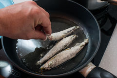 Fried small smelt tasty fish on a barbecue  hotplate Royalty Free Stock Photos