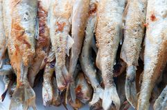 Fried smelt fish II Stock Images