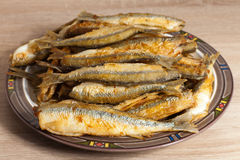 Fried smelt. Golden fried smelt on beautiful plate. Very tasty Royalty Free Stock Images