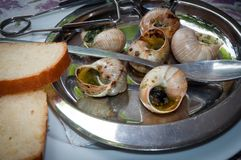 Fried snails with garlic butter . Stock Image