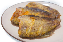 Fried Snakeskin gourami. Isolate on white Stock Image