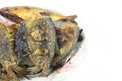 Fried Snakeskin gourami on white Royalty Free Stock Images