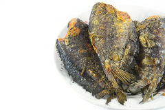 Fried Snakeskin gourami on white Stock Photography