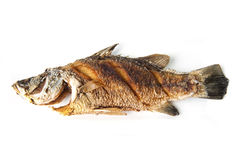 Fried snapper Stock Photo