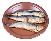 Fried sprat on ceramic plate Royalty Free Stock Photo