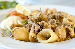 Fried squid. Closeup of fried squid served on white plate stock images
