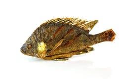 Fried Tilapia fish fried isolated on white background Stock Photos